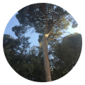 elagage arbre marseille