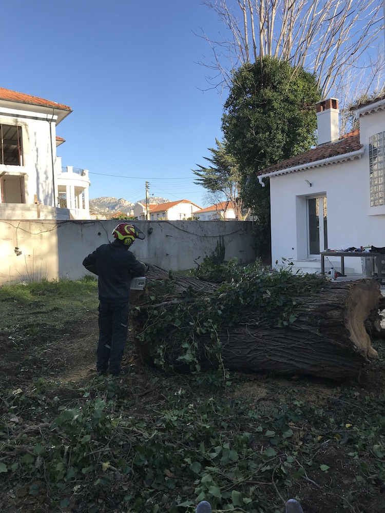 Abattage arbre marseille